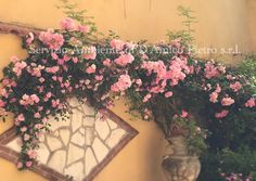 La nostra rosa rampicante! #ourgarden