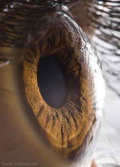 Schau mir in die Augen - Unheimlich beeindruckende Augen-Fotografie