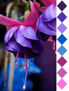 Fuschia 2, DRS!!! (beautiful color combinations - color id: Pantone, by leaff)