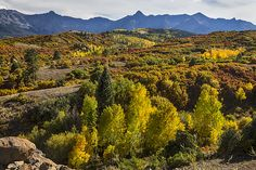 Scenic fall #foliage #autumn season view in the #Colorado Rocky Mountains in Ouray County, outside of Telluride Colorado. #WallArt #Art