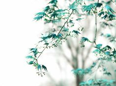 Dreamy Tree Photograph Whispers - Blue Maple Leaves Teal Turquoise Surreal Ethereal Fine Art Nature