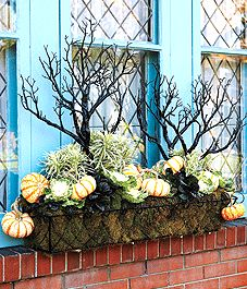 Style an autumn window box...I'll use spagnum moss for lining long openweave container, mini pumpkins and gourds and windfall branches sprayed black...for mantle in October and November