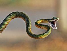 snake - Google Search