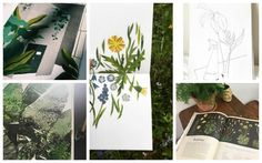 Plant illustration from Rachel Victoria Hillis, Nina Sophie, Clover Robin, Elisabeth Bukanova and Katie Scott Plant Illustration, Botanical Illustration, Instagram Accounts, Projects To Try, Robin, Plants, Victoria, Painting, Artists