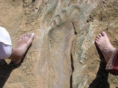Nephilim Giants and their huge ancient footprints have set in stone. Aliens And Ufos, Ancient Aliens, Ancient History, Jesus Bloodline, Nephilim Giants, Alien Theories, David And Goliath, Ufo Sighting, In Ancient Times