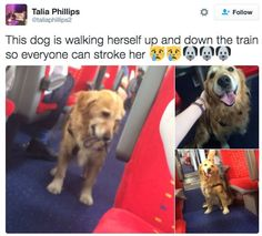Dog Pictures That Will Make You Feel Better About Life - Neatorama