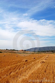 Summertime colors, Harvest time in Spain in a wheat field