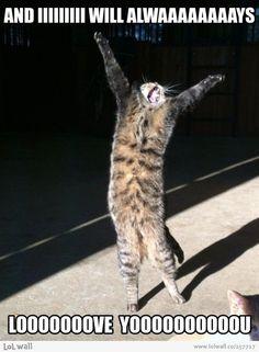 Amazing Creatures: 30 Funny Animal Captions - Part 8 Pics . Amazing Creatures: 30 Funny animal captions - part 8 pics - Animals and pets Funny Animal Quotes, Animal Jokes, Cute Funny Animals, Funny Animal Pictures, Funny Cute, Cute Cats, Funniest Animals, Funny Kitties, Cat Fun