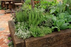 How to grow evergreen herbs, rosemary, sage & thyme.