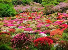 nstagramで人気の、国内で見られる圧巻の花景色をご紹介