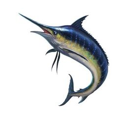 Find Blue Marlin Striped Marlin On White stock images in HD and millions of other royalty-free stock photos, illustrations and vectors in the Shutterstock collection. Marlin Azul, Fish Illustration, Illustrations, Photo Blue, White Stock Image, Fabric Wall Art, Big Fish, Fish Art, Pet Portraits