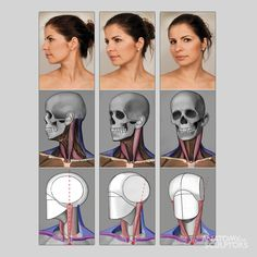 Exceptional Drawing The Human Figure Ideas. Staggering Drawing The Human Figure Ideas. Human Anatomy For Artists, Head Anatomy, Human Anatomy Drawing, Anatomy Poses, Body Anatomy, Anatomy Of The Face, Face Muscles Anatomy, Human Anatomy Female, Human Reference