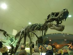 Stan, the T-Rex at the Black Hills Geological Institute.