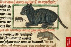 'A cat and a mouse' from Theological miscellany, including the Summa de vitiis, (England, 2nd or 3rd quarter of the 13th century, after c. 1236),  shelfmark Harley 3244 f. 49v, © British Library Board.