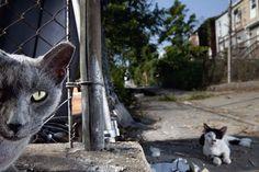 Born to Be Wild Fotografia di Vincent J Musi, 2010  Due gatti randagi fotografati a Baltimora per un servizio del 2011 sulla domesticazione degli animali, in cui si affermava che i gatti si sono addomesticati da soli circa 10.000 anni fa.