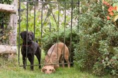Dog Gardening: A primer for making it safe and organic | The Bark #dogs #gardening #dogfriendly