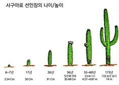 선인장 성장에 대한 이미지 검색결과