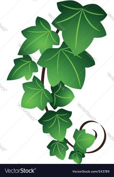 Ivy twig vector image on VectorStock Paper Flower Art, Paper Flowers, Green Leaves, Plant Leaves, Ivy Leaf, Arte Popular, Pattern Illustration, Flower Designs, Flower Power