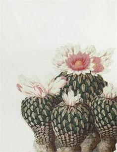 Creatures of Comfort Misch Dress - Flora White Botanical Art, Botanical Illustration, Cactus Illustration, Plants Are Friends, Southwest Art, Cactus Y Suculentas, Desert Rose, Cactus Flower, Cacti And Succulents