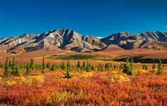 """""""l'automne en Alaska"""""""