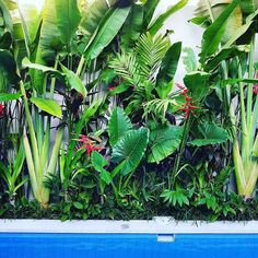 """Verdefique-se! ®️ on Instagram: """"Folhas largas e ar tropical 🍃🌿 • Referência •"""""""