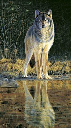 Wolf...Dismond McCaffery