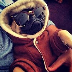 Piola con estilo (my stylish dog)