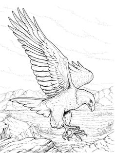 North American Bald Eagle Coloring page