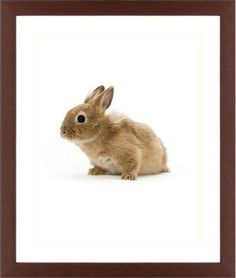 Bunny Framed Print, Brown, Contemporary, Cream, White, Single piece, 16 x 20 inches