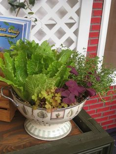 Countertop Salad Garden Using a Colander. Just add soil and plants.   The drainage is built in.