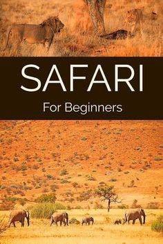 All you need to know before your first safari experience in Africa
