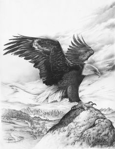 eagle by CaldeiraSP on deviantART