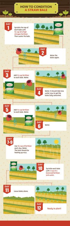 Straw Bale Gardening: Conditioning the Hay Bale