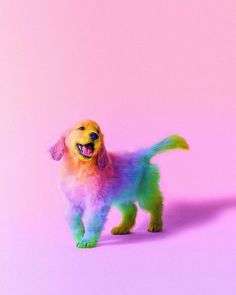 Animals in Rainbow Colors Cute Funny Animals, Cute Baby Animals, Animals And Pets, Rainbow Dog, Rainbow Sherbet, Rainbow Magic, Colorful Animals, Cute Dogs And Puppies, Doggies