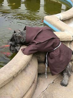 Meet Friar Bigotón (Friar Moustache), the stray doggie who just became a member of a St Francis Monastery in Cochabamba, Bolivia. The saint after which the Franciscan order was established is known as the patron of animals, so it's only natural that the monks extended their helping hand to the pooch living on the streets. Now he is one happy doggie who gets to enjoy life to the fullest. His life is all about playing and running, fellow friar Jorge Fernandez told The Dodo. Here, all of the...