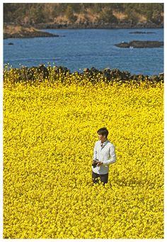 Final shoot on Jeju Island before entering military service Cr: Innisfree Boys Over Flowers, Flower Boys, Asian Actors, Korean Actors, Lee Min Ho Wallpaper Iphone, Ghost Album, Lee Minh Ho, Lee Min Ho Photos, Dance Sing