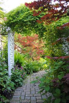 Transforming a side yard from Blah to Beautiful | Harmony in the Garden