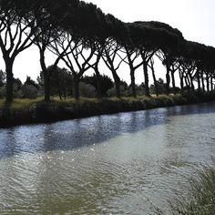 pins parasols, canal de la Robine. www.audetourisme.com