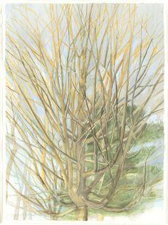 Sylvia Plimack Mangold. The Maple Tree 2/18/01. 2001
