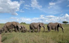 """""""When we were on safari in Central Serengeti with the Four Seasons, this herd of elephants passed right in front of our truck. It was unbelievably breathtaking."""""""