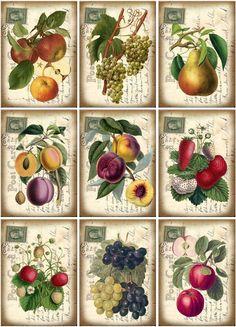 "18 ""Cooking Food"" Hang Gift Tags for Scrapbook Pages 10 Vintage Labels, Vintage Cards, Vintage Postcards, Etsy Vintage, Decoupage Printables, Decoupage Vintage, China Painting, Fruit Art, Collage Sheet"