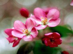 taustakuvia ilmaiseksi - Kevään: http://wallpapic-fi.com/luonto/kevaan/wallpaper-1365