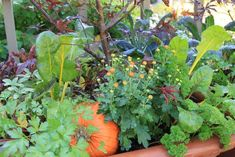 Edible Landscaping: Mixing Vegetables and Herbs with Flowers -- gardening tips Fruit Plants, Edible Plants, Edible Garden, Transplanting Plants, List Of Flowers, Fall Vegetables, Veggies, Border Plants, Plant Needs