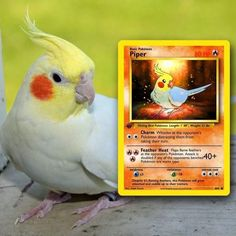 Artist Illustrates Pets Into Pokemon Cards And They Look Absolutely Adorable Fake Pokemon Cards, Pokemon Go, Game Of Thrones, Water Type, Pokemon Trading Card, Kino Film, Custom Cards, Card Games, Pets