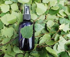 Birch Leaf Hydrosol Hydrolat Floral Water Natural Cosmetics Skin Care Face Toner Spa Beauty For oily skin care