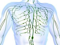 One of the incredible uses of essential oils is Restoring Lymphatic Flow. This page will help you understand and implement a few techniques to do so. Essential Oil Uses, Doterra Essential Oils, Lymphatic Drainage Massage, My Doterra, Depression Symptoms, Lymphatic System, Hormone Balancing, Solution, Natural Home Remedies