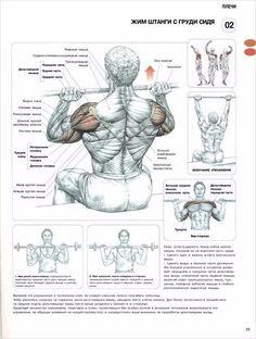 9) Жим штанги сидя  По сравнению с жимом штанги стоя, жим сидя позволяет более прицельно обработать дельты, так как здесь мышцы, играющие роль стабилизаторов туловища, практически отдыхают. Жим сидя с груди отличное упражнение как для развития передних дельт и верхней части грудных мышц, так и для укрепления мышц-вращателей плеча, от силы которых напрямую зависит здоровье плечевого сустава. Передние и средние дельты, мышцы-врыщатели плеча/Базовое упражнение/Объем и отчетливая форма плеч