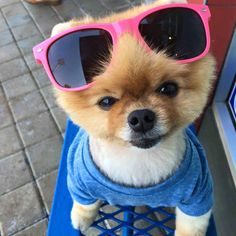 Pin By Vishakha Bang On Boo Pinterest - Jiff the pomeranian is easily the best dressed model on instagram