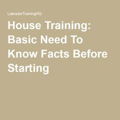 House Training: Basic Need To Know Facts Before Starting