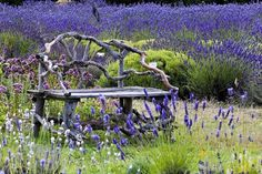 I would sit in this field of lavender - can you hear the bees?